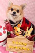 輸入犬服&ハーネスのお店 GO GO DOGS