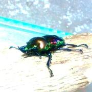 カブクワ飼育記〜昆虫は自然が造りだした芸術だ〜