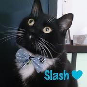 我が家の黒白猫Slashブログ