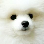 愛犬美容室じゅん