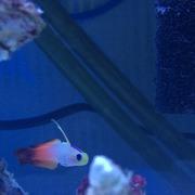 海水魚初心者YKTの海有記