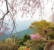 埼玉からの山歩き