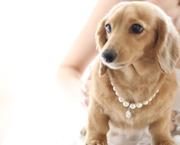 犬のアクセサリーBAAAL BASH DOG WEAR