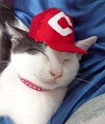 CatLife 〜シイ〜