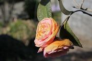 睡蓮一番、椿が二番、結婚なんて手段です。