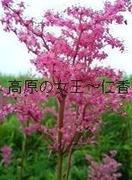 高原の女王〜仁香〜霊気