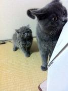 マンマルムチムチブリブリブログ。あ、黒猫もいるよ
