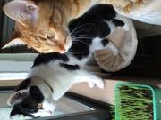 Welcome〜保護猫から家猫へ〜