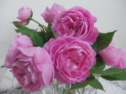 roseさんのプロフィール