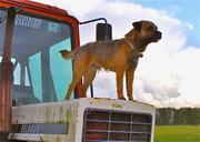 イギリス田舎暮らし ボーダーテリア Leoの毎日