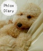 Phlox Diary