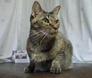 Second Cat Life〜保護猫のQOLを考える〜