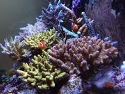 動物病院待合室の珊瑚礁と海水魚、獣医さんの水槽