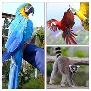 hidenoriと動物たちとの楽しい生活