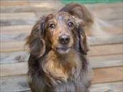 犬の美容と雑貨・ドックランのお店Ann,Kuroda