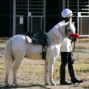 ブラリアンの競馬工学 『ガチでパドック』