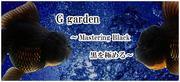 G garden〜サラリーマンが金魚屋になったら〜