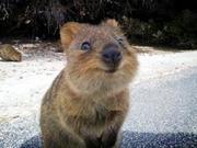 超ネガティブ女、オーストラリアに行く