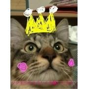 猫かふぇ〜「おもひでのピート」☕