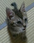 猫田さんのプロフィール