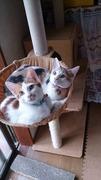 兄妹猫&文鳥のまいにち