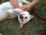 保護犬の里親募集ブログ