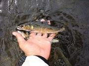 日本の真ん中で鮎釣り