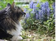 庭いじり猫いじり
