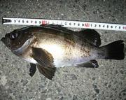 岡山の釣り爺