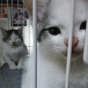 猫生活と重症筋無力症の私