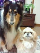 小さな幸せー犬たちと共にー