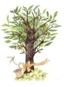 雑貨・レンタルシェルフ オリーブの木