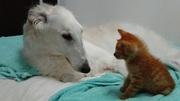 ははぅえの独り言♪〜猫とネコ犬〜