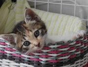 猫のなつめと、もなかの日記+こはく