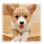 静岡県浜松市子犬のブリーダー直販アニマルファーム
