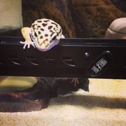 爬虫類飼育生活