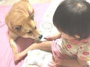 liebeの可愛い天使たち〜1歳女児と2歳柴犬ママ〜