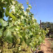 カリフォルニア的 ワイン生活〜Santa Barbara County