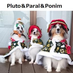 Pluto&Paral&Ponim diary!!