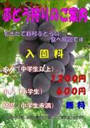 矢崎農園Diary 〜園主の日記〜