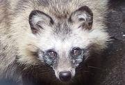 日刊 Zoo Ring 動物園・水族館ニュース