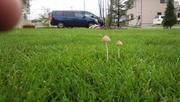 教えて♪綺麗な芝庭づくり!