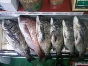津軽の釣りキチ四平