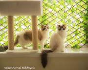 M-photoさんのプロフィール