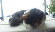 猫と手作りが好きで日々自然体^^ねこたんのブログ