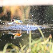 湘南野鳥写真