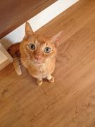15歳の高齢猫チャオのリンパ腫闘病日記