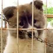 動物愛護センターに行こう!
