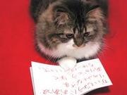 猫大好き人間さんのプロフィール