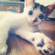 ノノの猫生。